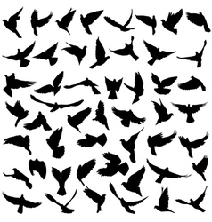 Concept of love or peace Set silhouettes doves vector image vector image