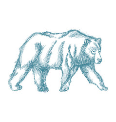 animal wild bear blue hand-drawing vector image vector image