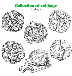 collection of cabbage in sketch style vector image