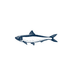 Herring or sardine saltwater fish isolated animal vector