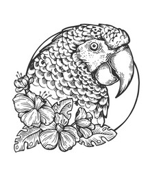 Parrot bird head animal engraving vector