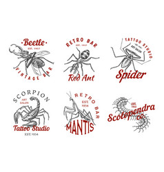 Set of insects logos vintage pets labels for bar vector