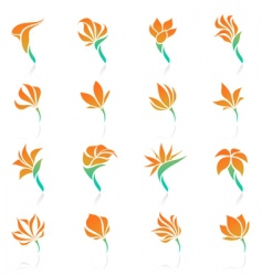 tropical flowers elements for design vector image
