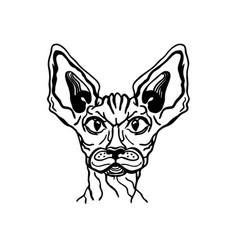 cat sphynx portrait animal handdrawn vector image