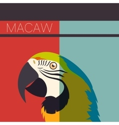 Flat postcard with Macaw vector