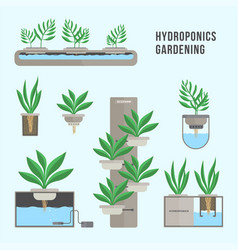 hydroponic system gardening technology vector image