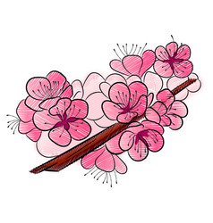 sakura a curved branch with delicate flowers and vector image