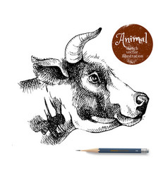 hand drawn sketch cow profile head isolated vector image