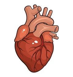 Human heart vector