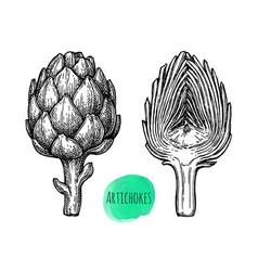 ink sketch of artichokes vector image