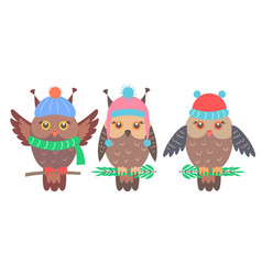 set funny owls on branches vector image