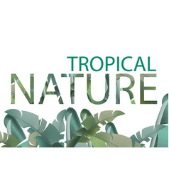 tropical leaves card summer template vector image