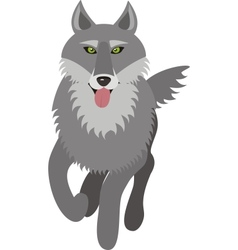 wolf picture vector image vector image