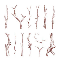 Hand drawn wood twigs wooden sticks tree vector