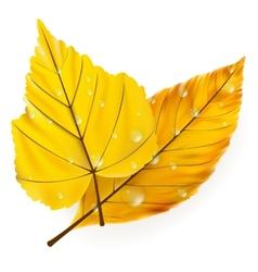 Autumn leaf isolated on white plus EPS10 vector image