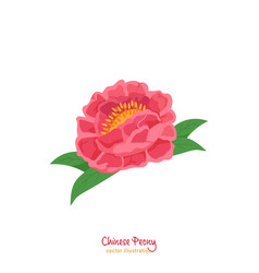 Chinese peony image vector