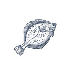 gulf flounder isolated ocean fish european halibut vector image