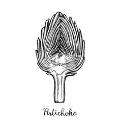 ink sketch of sliced artichoke vector image