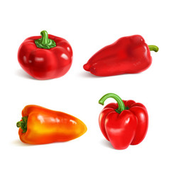 set sweet paprika bell and cherry peppers vector image
