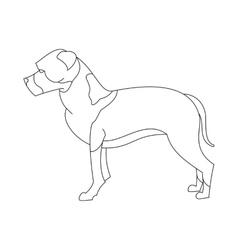American staffordshire terrier vector