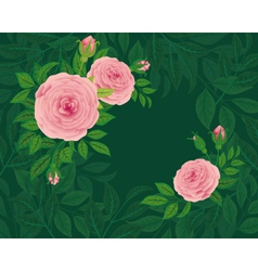 Background of roses vector