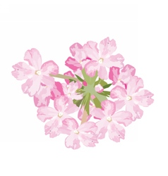 Delicate Pink flowers card vector