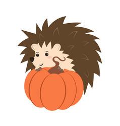 hedgehog with pumpkin vector image