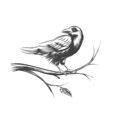 Raven or black crow sketches and silhouettes set vector