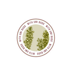 round emblem with hand drawn sea grapes or umi vector image
