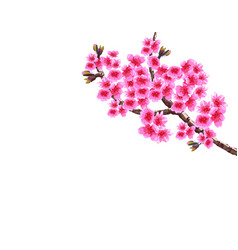 Sakura lush curved branches of a blossoming vector