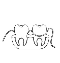 Teeth and gums with dental floss between them in vector
