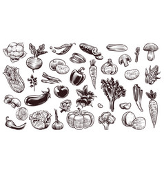 vegetables sketch hand drawn various farming vector image