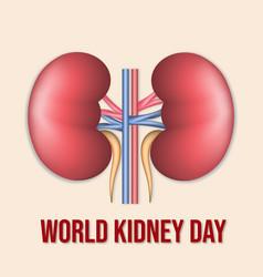 World kidney day poster or banner vector