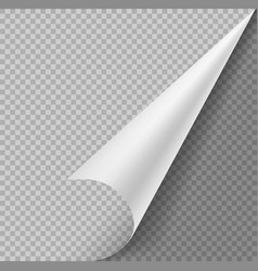 Curled corner paper blank page or sticker vector