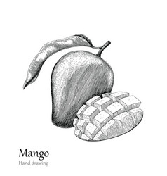 Mango hand drawing engraving style vector