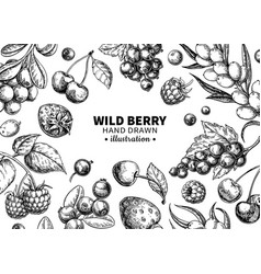 wild berry drawing hand drawn vintage vector image