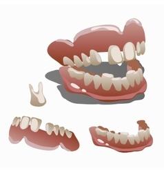 Human jaw and tooth molar closeup vector