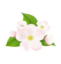 Apple Tree Flowers vector image