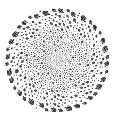 Opium poppy cycle stream vector