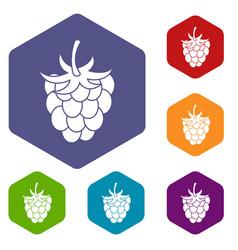 raspberry or blackberry icons set hexagon vector image
