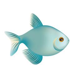 colorful realistic fish aquatic animal icon vector image vector image
