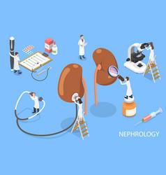 3d isometric flat concept nephrology vector