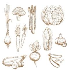 vintage sketches farm vegetables vector image