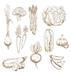 Vintage sketches of farm vegetables vector image