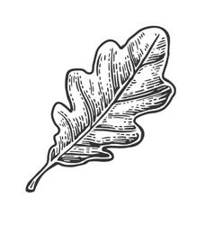 Oak leaf vintage engraved vector image vector image