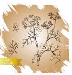 background sketch herbs - dill vector image