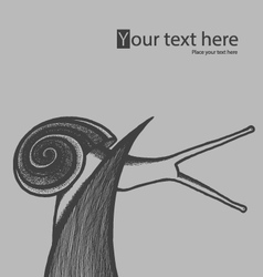 Hand draw snail on blade of grass vector image