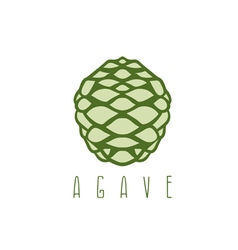 Design template agave root vector