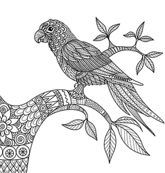 Doodle design parrot on branch for adult color vector