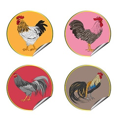 Roosters stickers vector